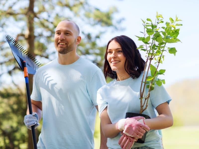Pares voluntários com árvores e ancinho no parque imagens de stock royalty free