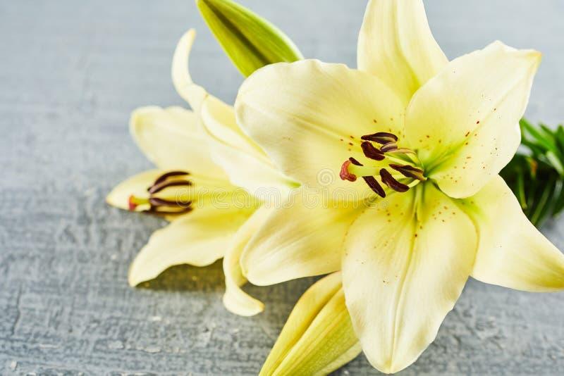 Paret av blomman blommar över konkret bakgrund arkivbilder