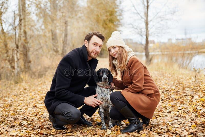 Paret som är förälskat på en varm höstdag, går i parkera med en gladlynt hundspaniel Förälskelse och mjukhet mellan en man och en arkivbild