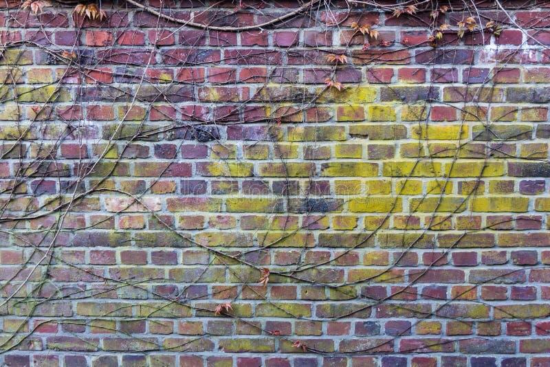 parete fotografie stock libere da diritti