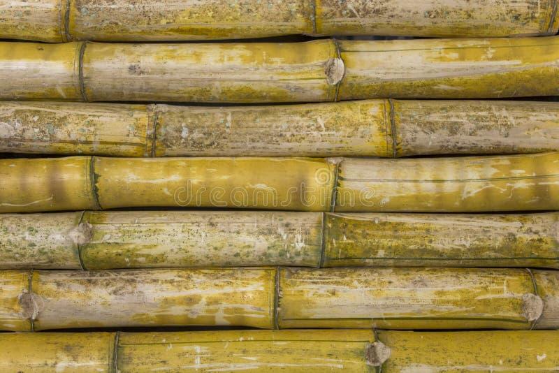 Parete asciutta verde gialla grigia del recinto dei tronchi di bambù Linee orizzontali struttura di superficie naturale immagini stock libere da diritti