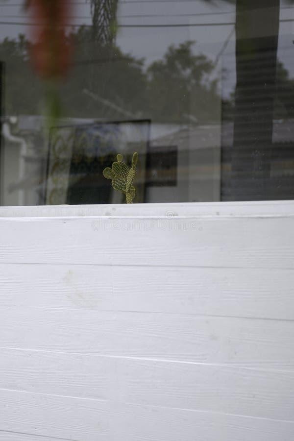 Parete bianca con poco cactus verde dietro la finestra immagine stock