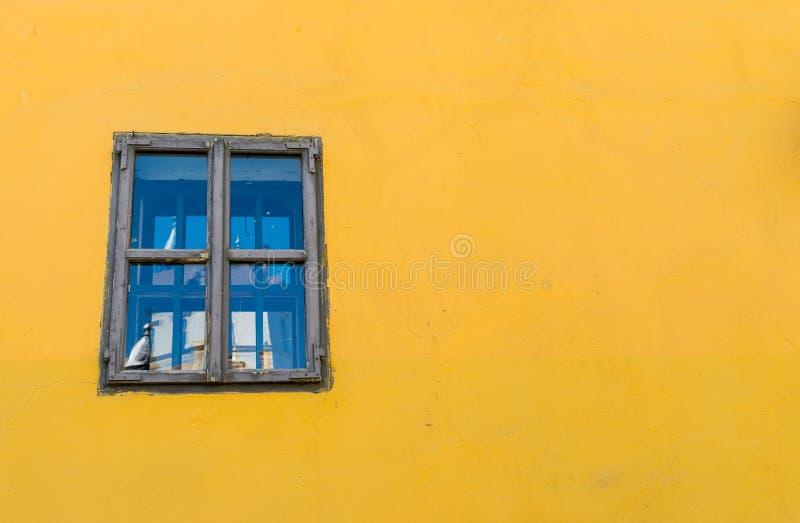 Parete colorata luminosa con la finestra sulle vie medievali di Sighisoara immagine stock libera da diritti