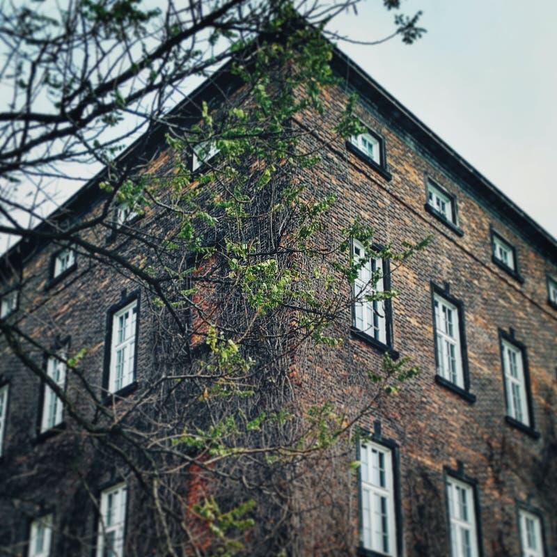 Parete del castello di Wawel in Polonia fotografia stock