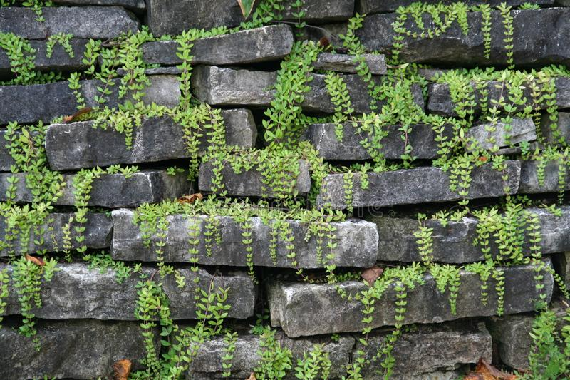 Parete della roccia con le piante fotografia stock libera da diritti