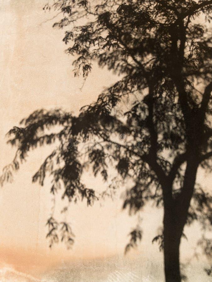 Parete dello stucco, ombra dell'albero fotografia stock libera da diritti