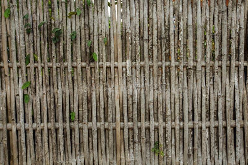 Parete di bambù, bambù a Kanchanaburi Tailandia fotografie stock