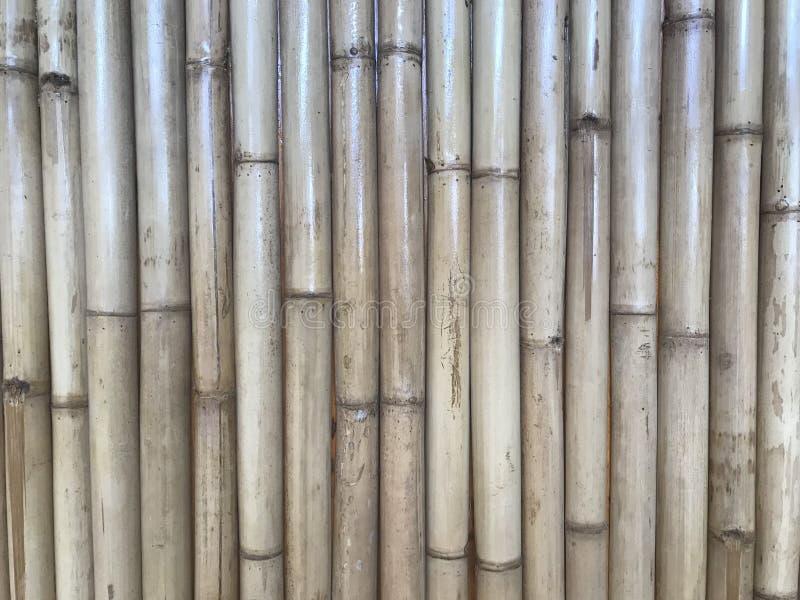 Parete di legno di bambù marrone naturale dei tronchi fotografia stock libera da diritti