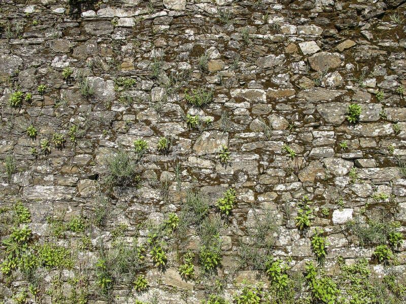 Parete di pietra con erba, Spagna fotografia stock