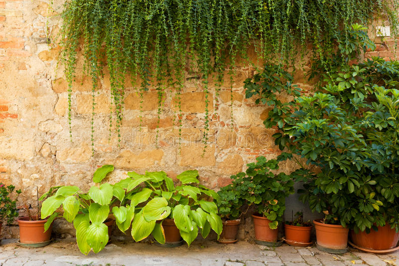 Parete di pietra con i fiori e l'edera Vecchio fondo italiano della casa, Italia d'annata fotografie stock libere da diritti