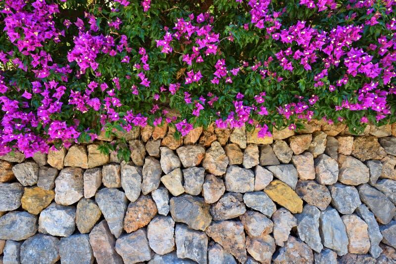 Parete di pietra decorata con la buganvillea fotografia stock
