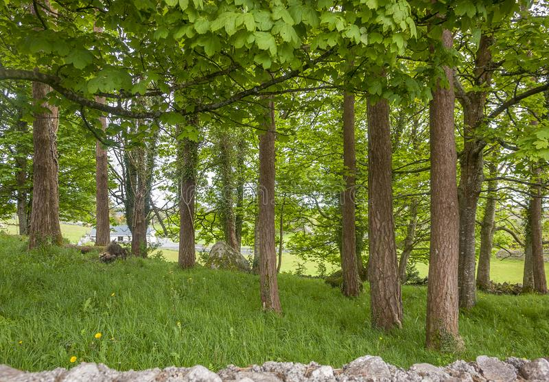 Parete di pietra ed alberi immagini stock