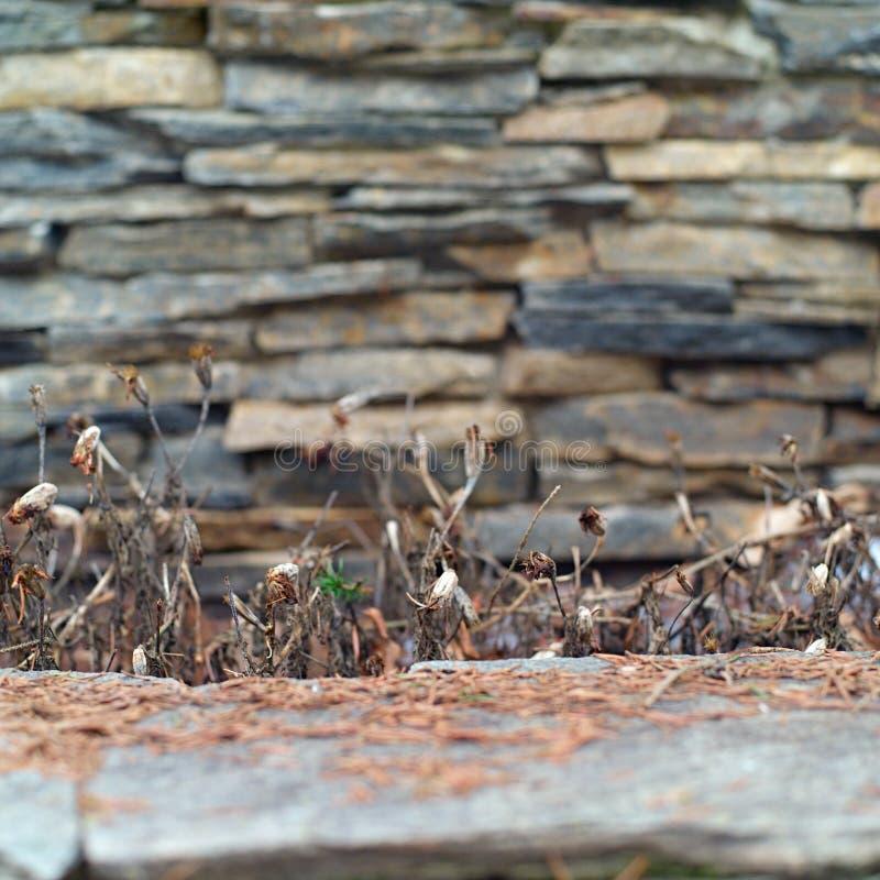Parete di pietre e piante appassite fotografie stock
