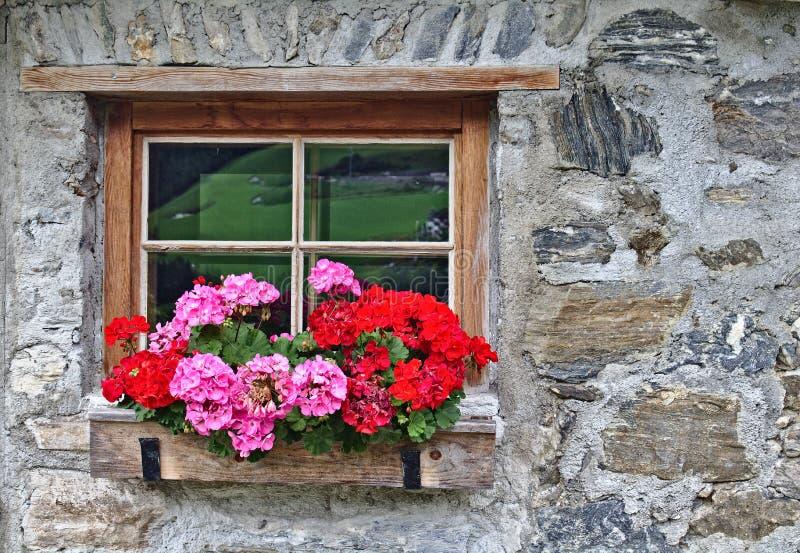 Parete di vecchia casa dell'azienda agricola fatta delle pietre di campo con la finestra ed i fiori rossi fotografia stock libera da diritti
