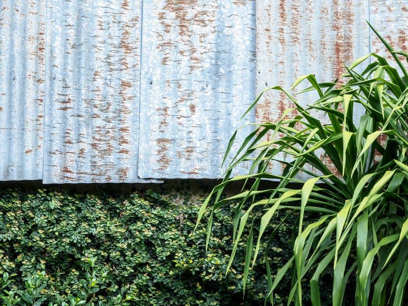 Parete e foglie verdi dello zinco immagine stock