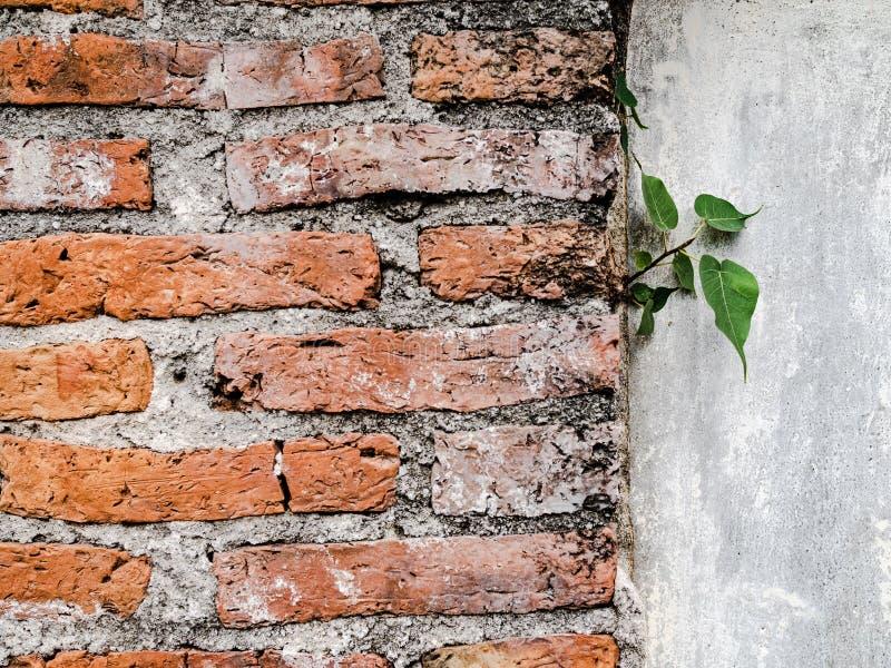 Parete incrinata del cemento ed erbaccia crescente immagine stock libera da diritti