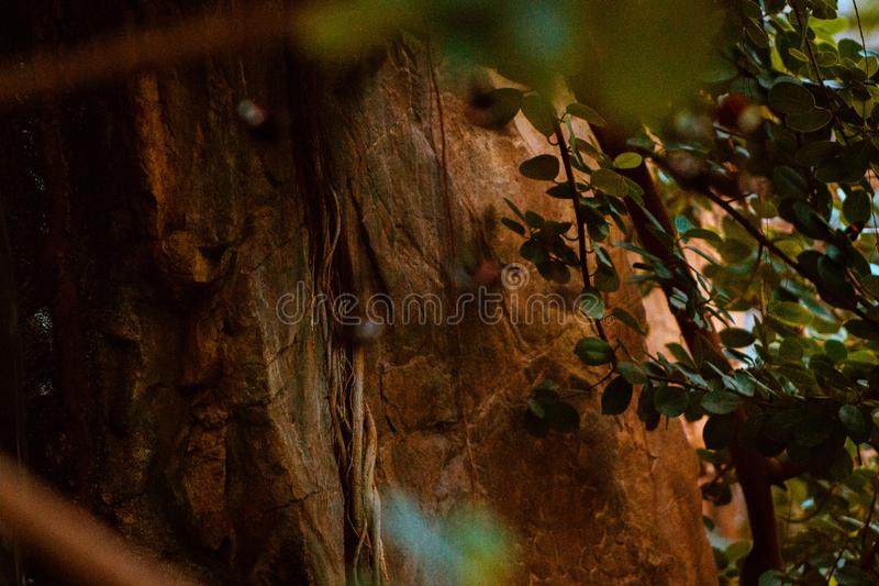 Parete rocciosa di una cascata nella serra tropicale a Frederik Meijer Gardens a Grand Rapids Michigan fotografia stock