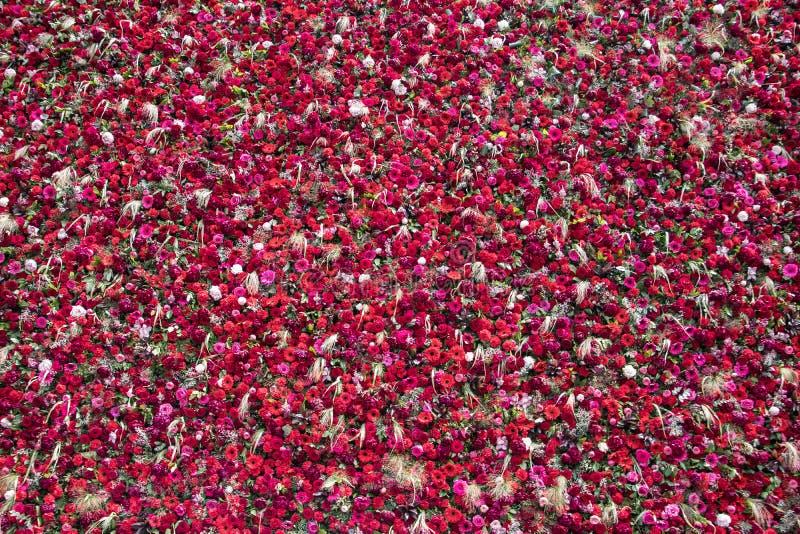 Parete stupefacente bella fatta di 1000 fiori immagine stock