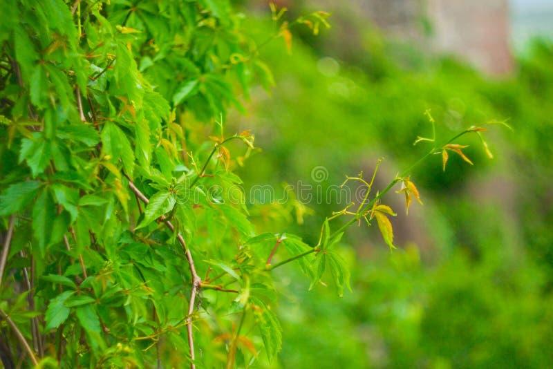 Parete verde fotografia stock