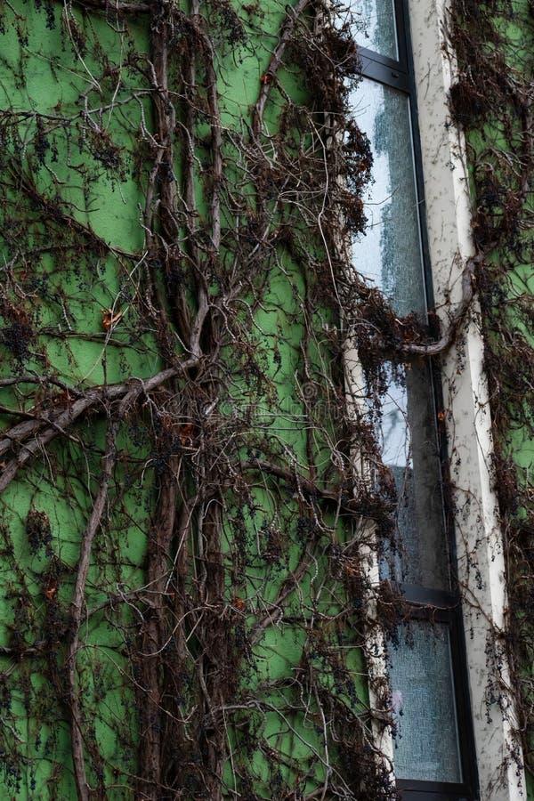 Parete verde dell'appartamento fotografie stock