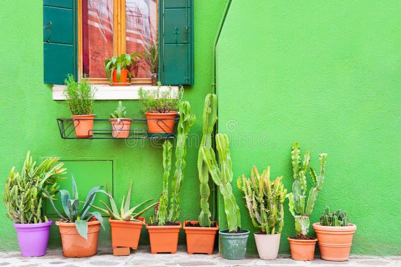 Parete verde della casa e delle piante verdi nei vasi immagine stock libera da diritti