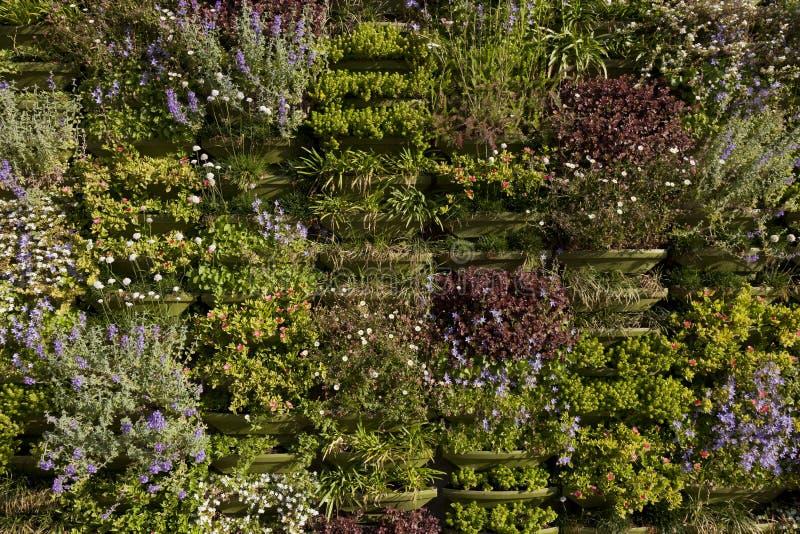 Parete verde o primo piano verticale del giardino for Come costruire un mazzo del secondo piano