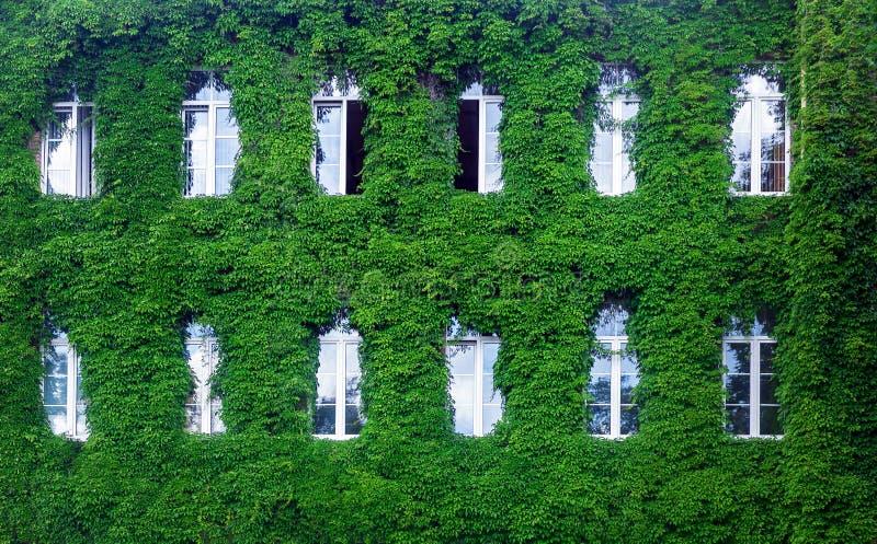 Parete verde in una costruzione sostenibile, con il giardino verticale nella facciata immagine stock