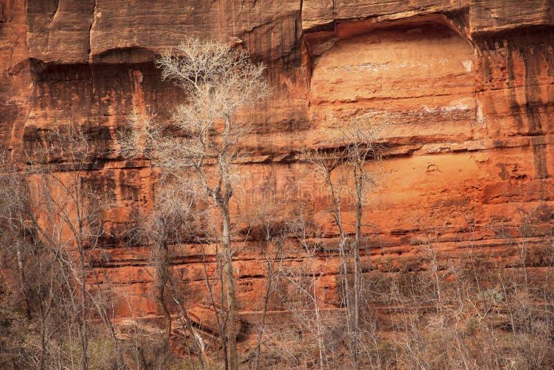 Pareti di canyon rosse della roccia degli alberi Zion immagini stock