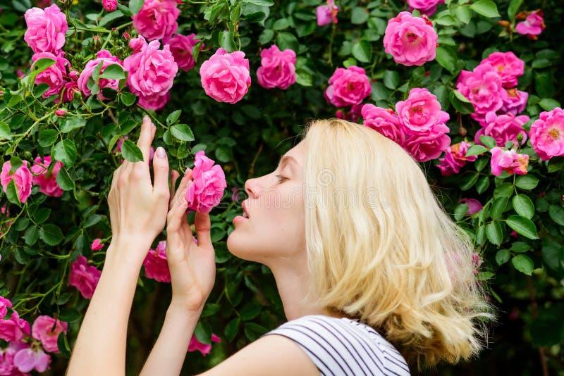Parfum en Schoonheidsmiddelen Vrouw voor bloeiende rozenstruik Bloesem van wilde rozen Geheim tuinconcept Aroma van stock afbeelding
