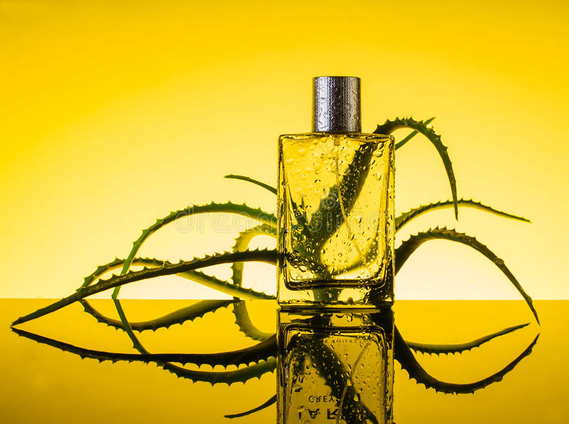 Parfume с свежими цветками, косметика, вода, алоэ стоковое фото rf