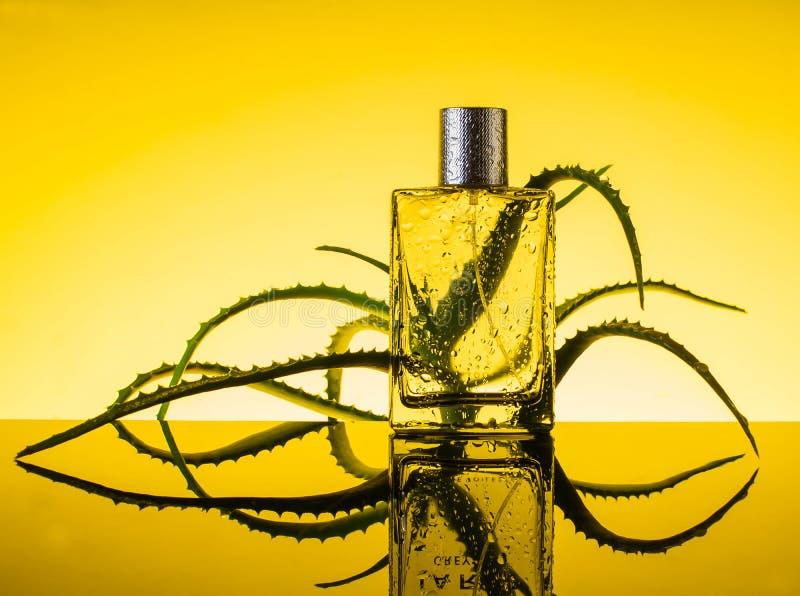 Parfume con las flores frescas, cosmético, agua, áloe foto de archivo libre de regalías