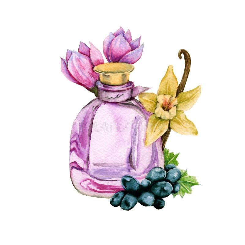 parfymera kvinnor Arom av vanilj, druvor och magnolian stock illustrationer