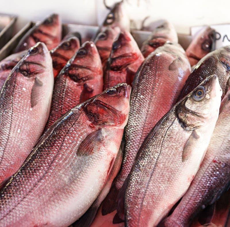 Pargo rojo fresco para la venta en un mercado de pescados. foto de archivo