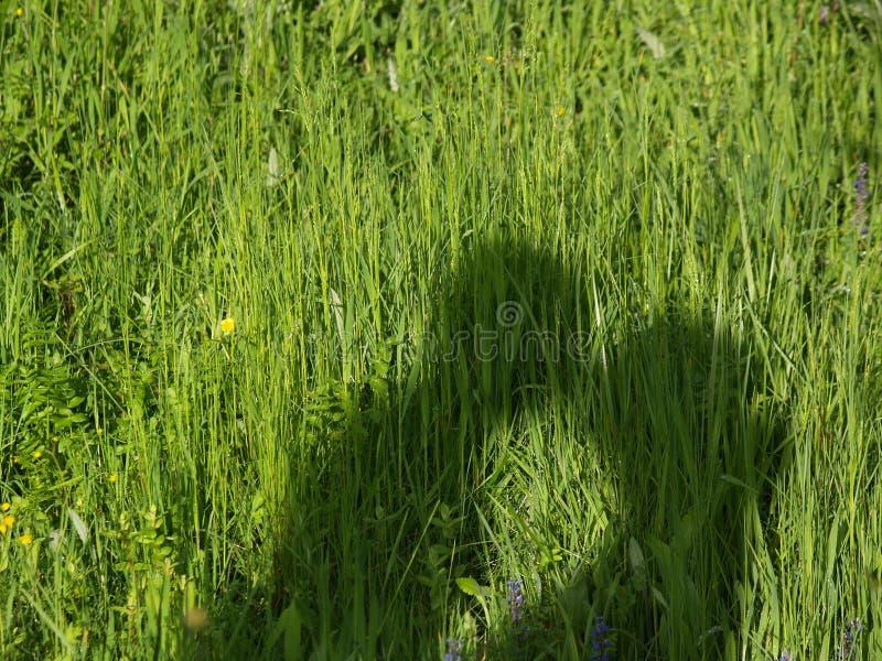 pargräs arkivbilder