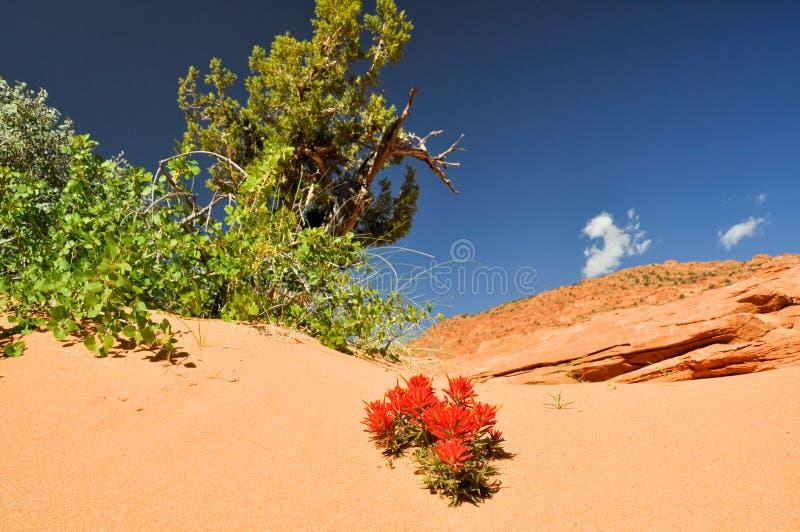 Paria canion-Vermiljoenen Klippen Wildernes, Arizona stock afbeeldingen