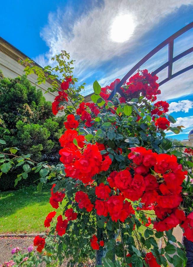 Parijs, Frankrijk, Juni 2019: Tuin van Installaties Jardin des plantes royalty-vrije stock afbeelding