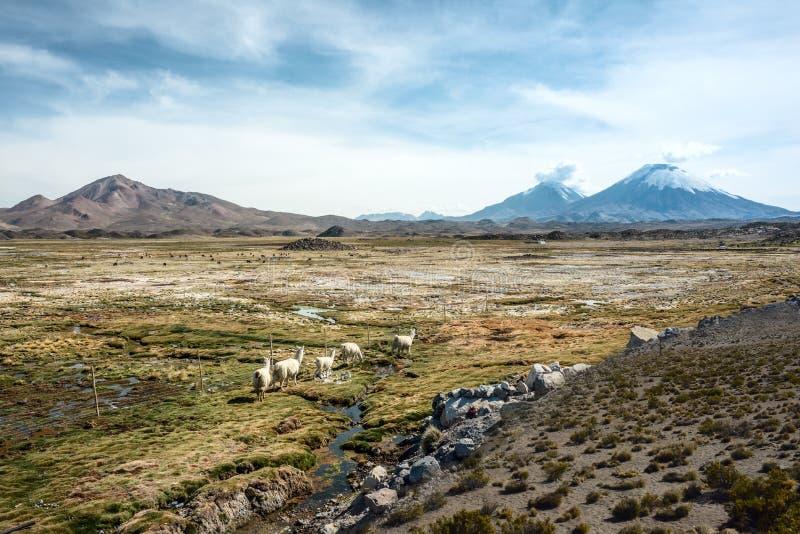 Parinacota wulkan, Lauca, Chile obraz stock