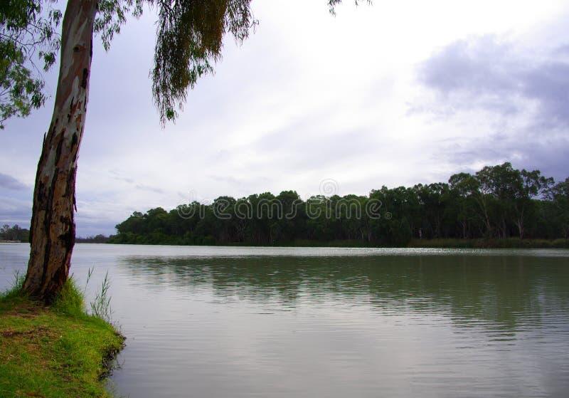 Paringa Riverland imagens de stock