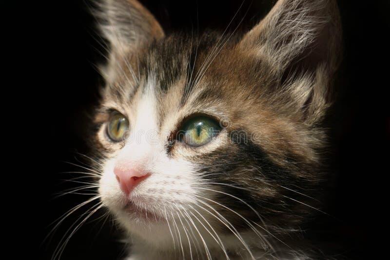 Paris die Katze stockfoto