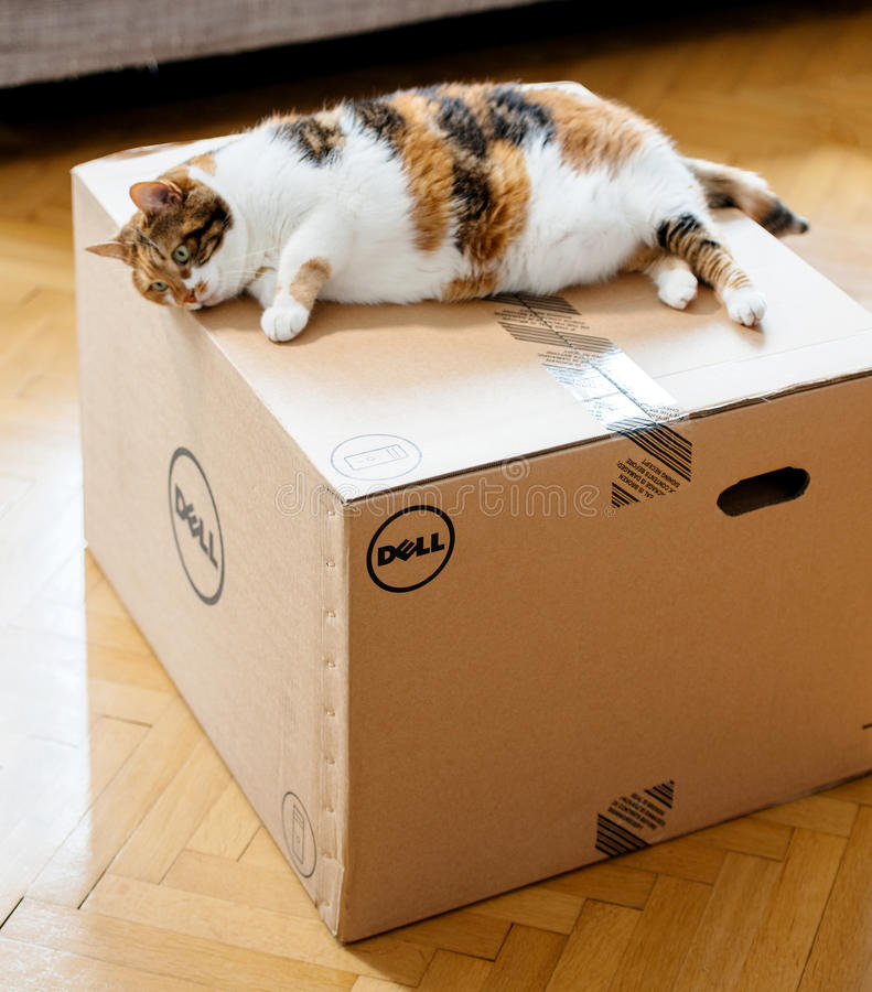 Cat inspecting the DELL computer cardboard box. PARIS, FRANCE - AUG6: Cat inspecting new DELL workstation computer box after delivery by the parcel courier stock images