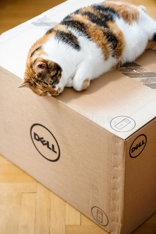 Funny cat sleeping on DELL computer box. PARIS, FRANCE - AUG6: Cat sleeping on the new Dell Computer workstation cardboard box delivered by courier and left by royalty free stock images