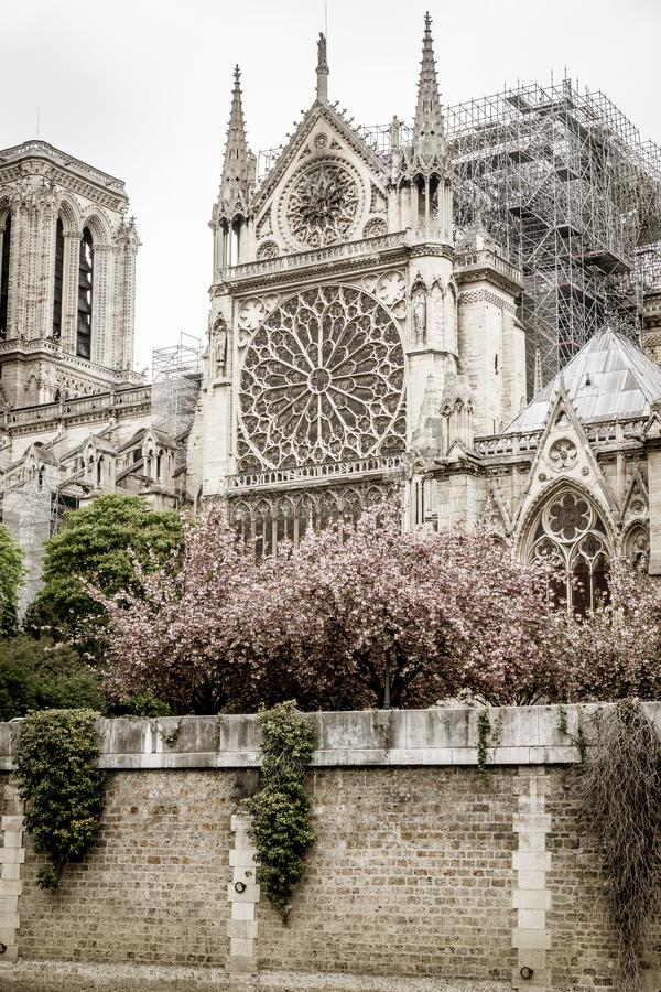 Paris Frankrike - April 16th, 2019: Domkyrka Notre Dame de Paris efter den tragiska branden av April 15th, 2019 arkivfoton