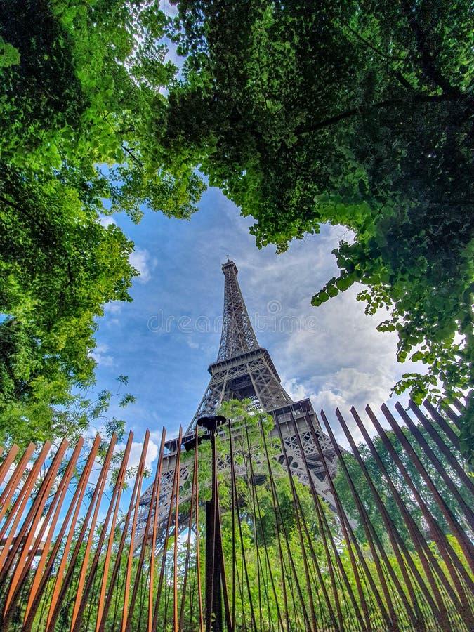 Paris Frankrike, Juni 2019: Eiffeltorn mellan träden fotografering för bildbyråer