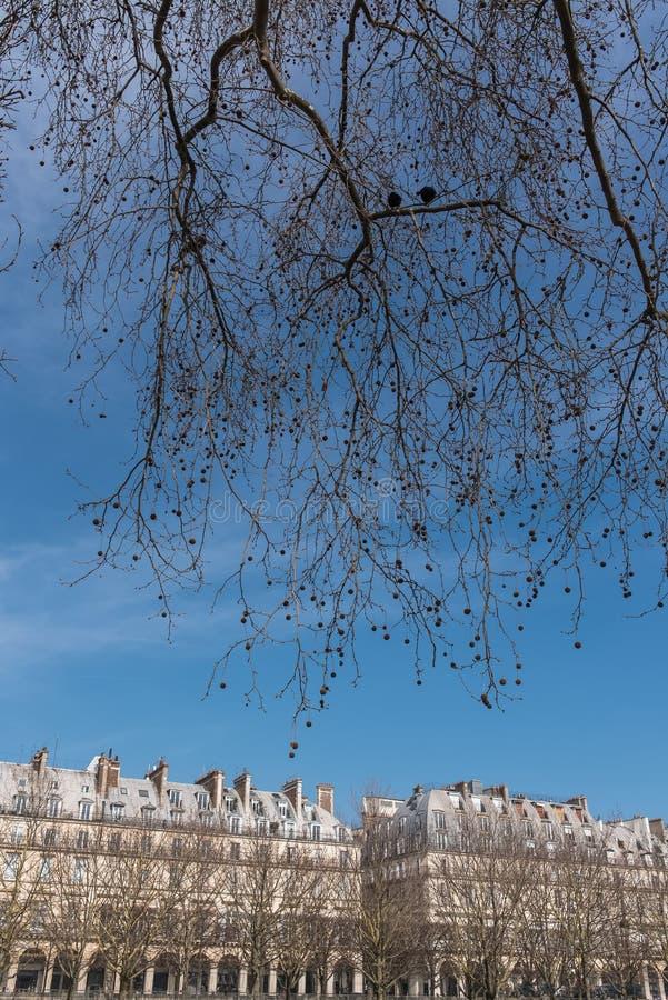 Paris härlig byggnad royaltyfria foton
