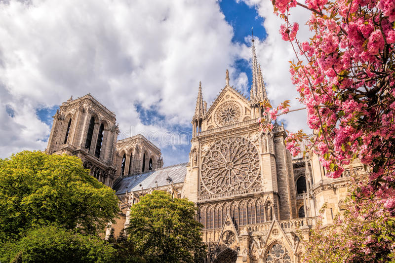 Paris, Notre Dame cathedral with blossomed tree in France. Paris, famous Notre Dame cathedral with blossomed tree in France stock photo
