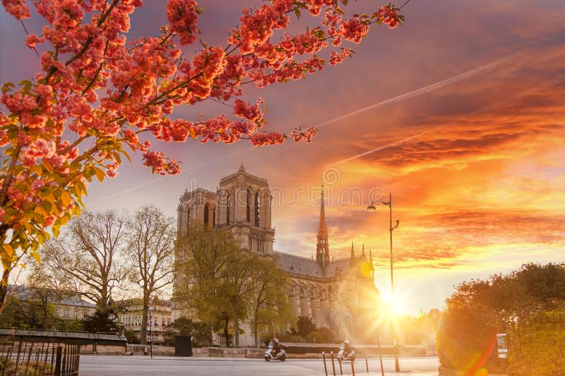 Paris, Notre Dame cathedral with blossomed treeagainst colorful sunrise in France. Paris, famous Notre Dame cathedral with blossomed treeagainst colorful sunrise stock photography