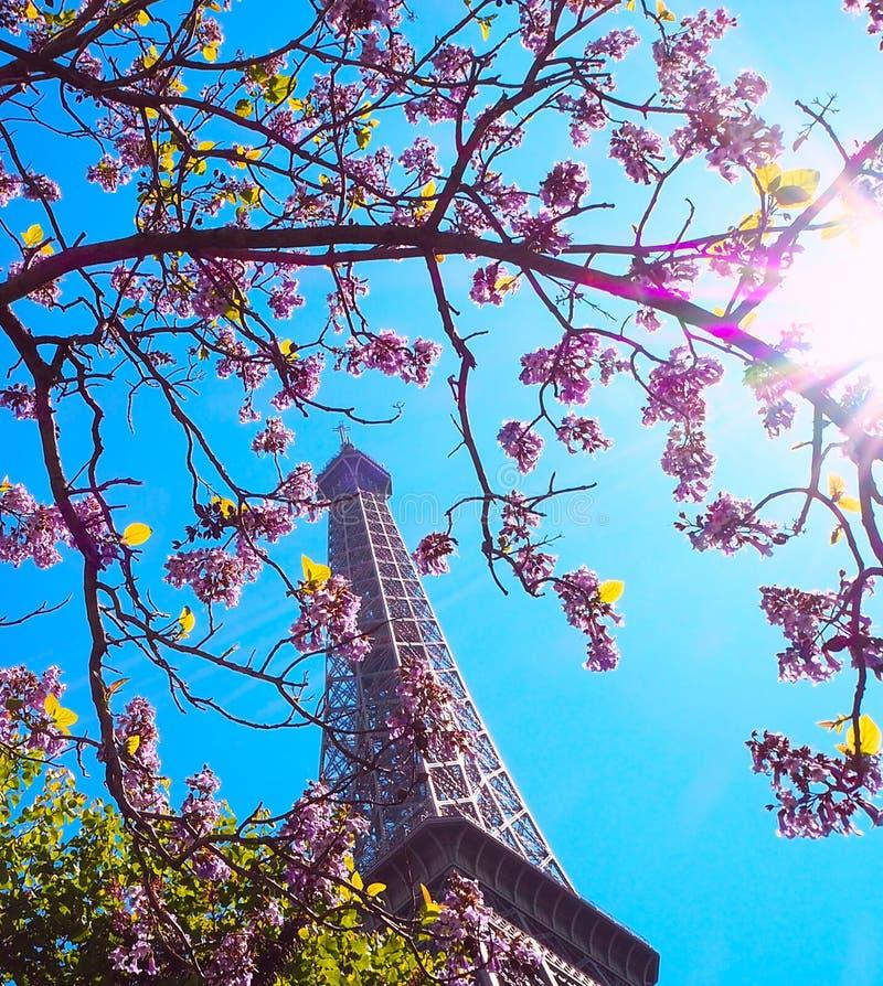 Paris, Tour Eiffel sur un fond des fleurs roses, magnolias, arbres verts Source à Paris image stock