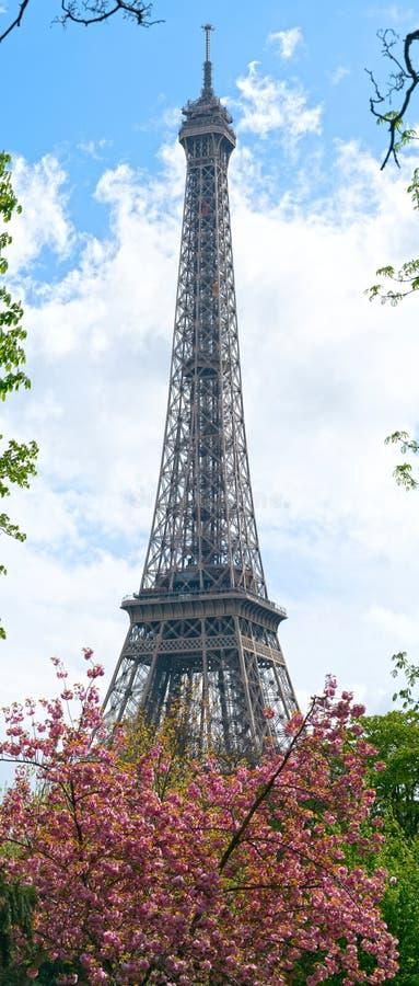 paris wiosna Kwitnąć czereśniowych drzewa i wieżę eiflą Ostrość na wieży eifla obraz royalty free