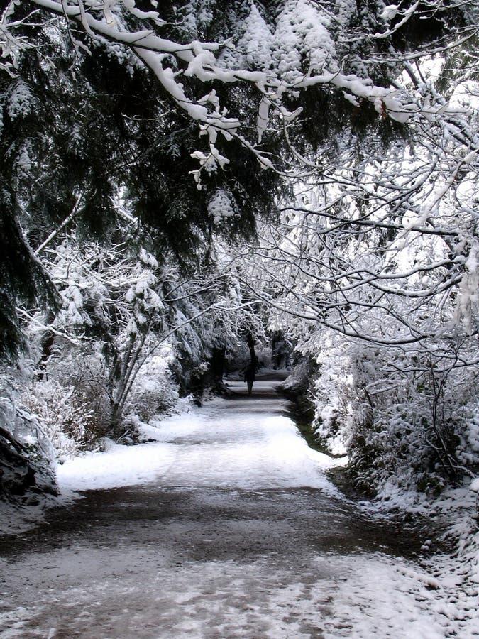park ślady śniegu fotografia royalty free
