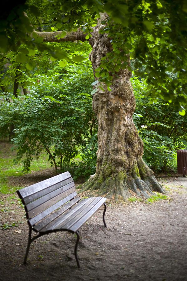Download In the park stock photo. Image of leisure, green, tree - 12853070